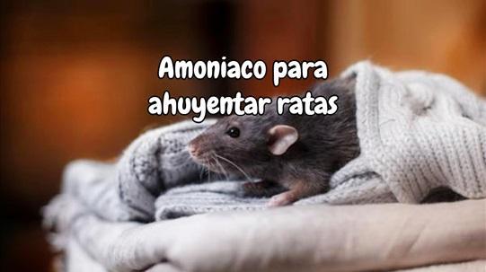 Amoniaco para ahuyentar ratas