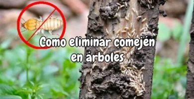 Cómo eliminar comején en árboles