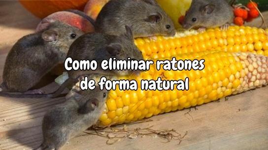 Como eliminar ratones de forma natural