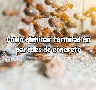 Como eliminar termitas en paredes de concreto