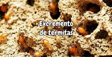 Excremento de termitas