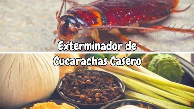Exterminador de Cucarachas Casero