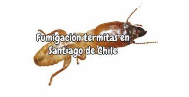 Fumigación termitas en Santiago de Chile