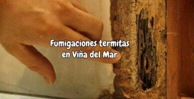 Fumigaciones termitas viña del mar