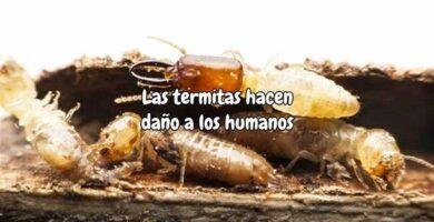 Las termitas hacen daño a los humanos