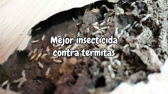 Mejor insecticida contra termitas