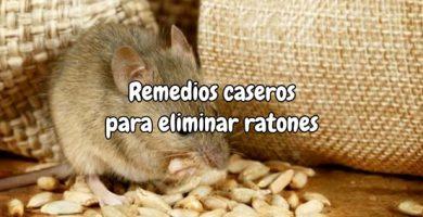 Remedios caseros para eliminar ratones