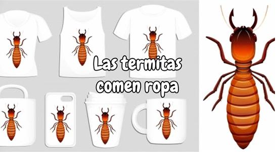 las termitas comen ropa